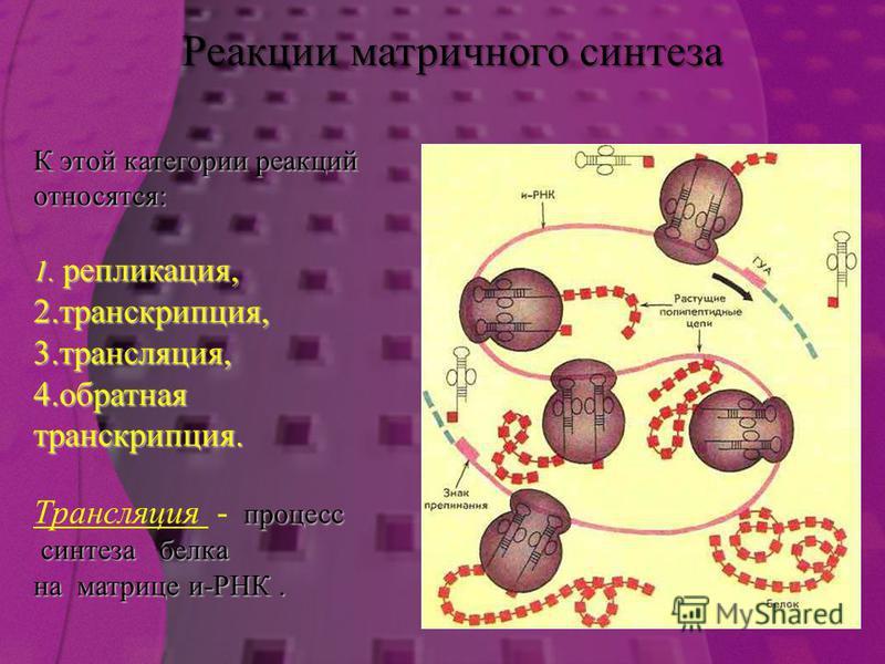 К этой категории реакций относятся: 1. репликация, 2. транскрипция, 3. трансляция, 4. обратная транскрипция. процесс Трансляция - процесс синтеза белка синтеза белка на матрице и-РНК. Реакции матричного синтеза
