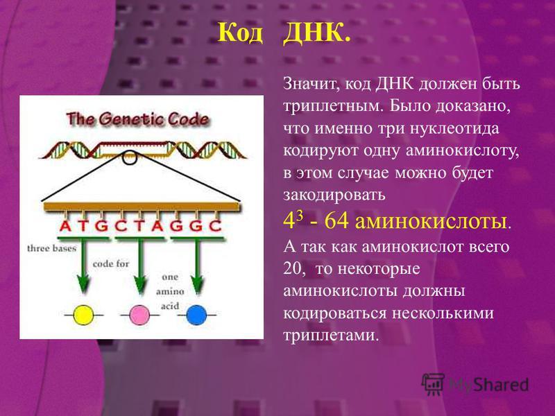 Значит, код ДНК должен быть триплетным. Было доказано, что именно три нуклеотида кодируют одну аминокислоту, в этом случае можно будет закодировать 4 3 - 64 аминокислоты. А так как аминокислот всего 20, то некоторые аминокислоты должны кодироваться н