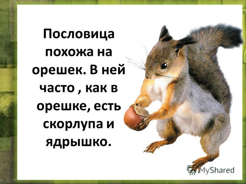 Пословица похожа на орешек. В ней часто, как в орешке, есть скорлупа и ядрышко.