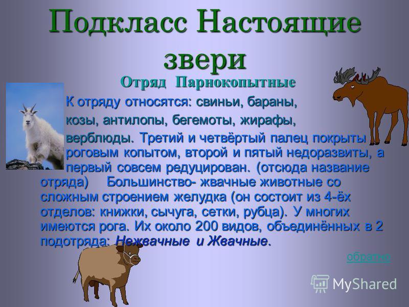Подкласс Настоящие звери Отряд Хищные Отряд объединяет 7 современных семейств, всего около 235 различных видов. ПРЕДСТАВИТЕЛИ: Волки, лисицы, песцы, собаки, львы, тигры, леопарды, дикие и домашние кошки, соболи, куницы, хорьки, норки, медведи и др. Д