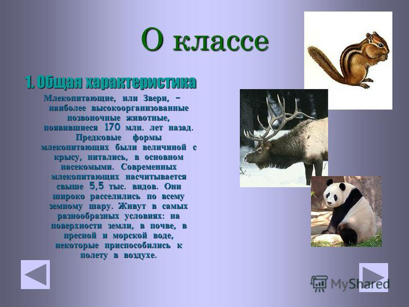 Класс М ЛЕКОПИТАЮЩИЕ Программа для 7 ого класса по зоологии
