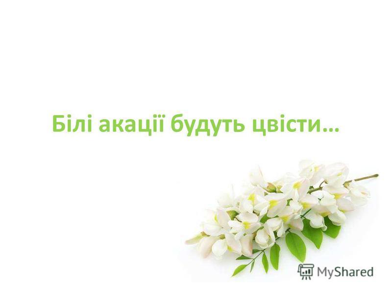 Білі акації будуть цвісти…