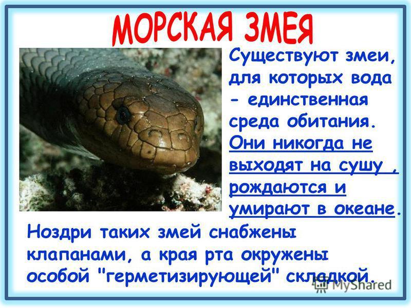 Ноздри таких змей снабжены клапанами, а края рта окружены особой герметизирующей складкой. Существуют змеи, для которых вода - единственная среда обитания. Они никогда не выходят на сушу, рождаются и умирают в океане.