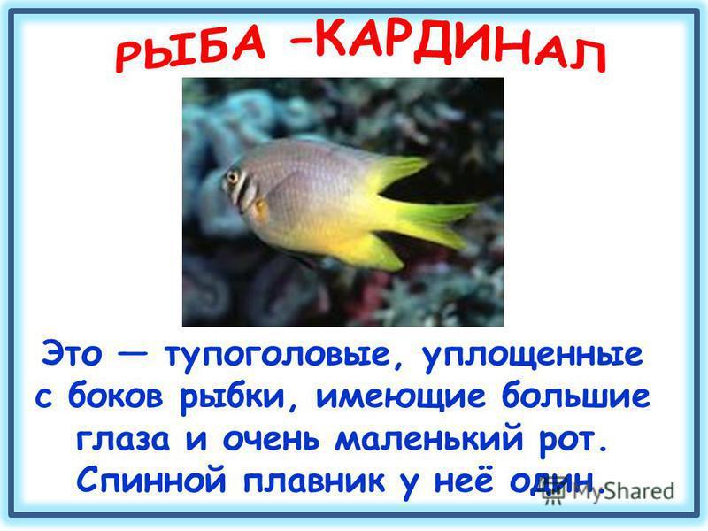 Это тупоголовые, уплощенные с боков рыбки, имеющие большие глаза и очень маленький рот. Спинной плавник у неё один.