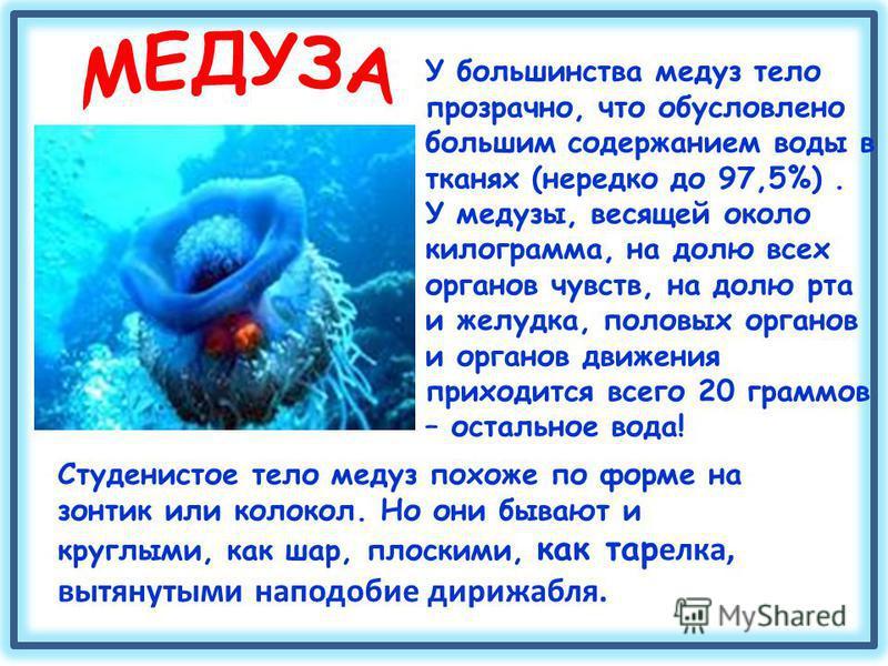 Студенистое тело медуз похоже по форме на зонтик или колокол. Но они бывают и круглыми, как шар, плоскими, как тар елка, вытянутыми наподобие дирижабля. У большинства медуз тело прозрачно, что обусловлено большим содержанием воды в тканях (нередко до