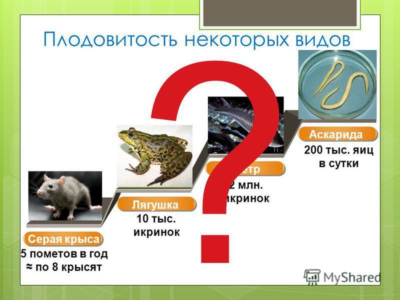 Плодовитость некоторых видов Серая крыса 5 пометов в год по 8 крысят 2 млн. икринок 200 тыс. яиц в сутки 10 тыс. икринок Лягушка Осетр Аскарида ?