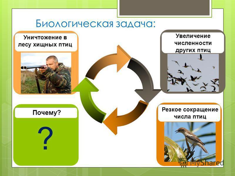 Биологическая задача: Почему? Уничтожение в лесу хищных птиц Резкое сокращение числа птиц Увеличение численности других птиц ?