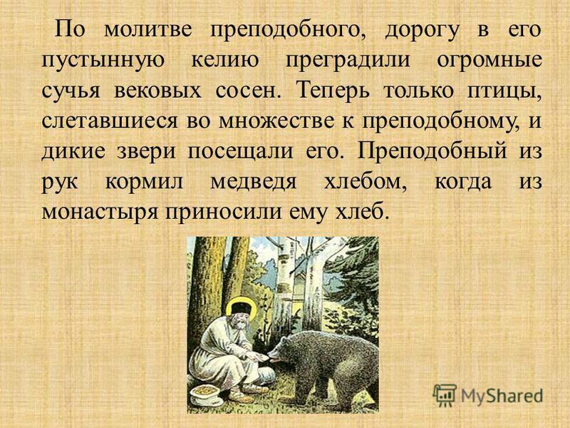 По молитве преподобного, дорогу в его пустынную келию преградили огромные сучья вековых сосен. Теперь только птицы, слетавшиеся во множестве к преподобному, и дикие звери посещали его. Преподобный из рук кормил медведя хлебом, когда из монастыря прин