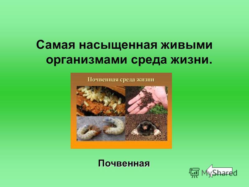 Самая насыщенная живыми организмами среда жизни. Почвенная