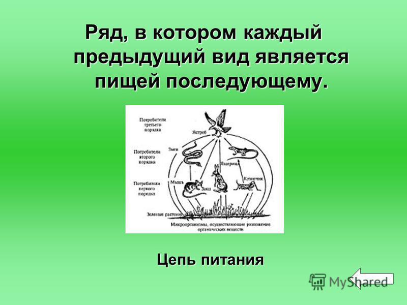 Ряд, в котором каждый предыдущий вид является пищей последующему. Цепь питания