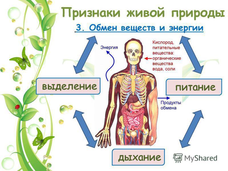 Признаки живой природы 3. Обмен веществ и энергии