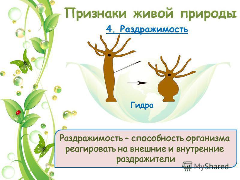 Признаки живой природы 4. Раздражимость Гидра