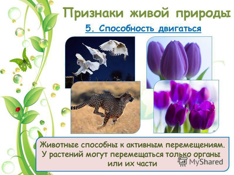 Признаки живой природы 5. Способность двигаться