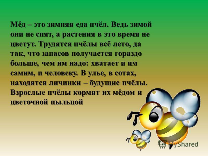 Мёд – это зимняя еда пчёл. Ведь зимой они не спят, а растения в это время не цветут. Трудятся пчёлы всё лето, да так, что запасов получается гораздо больше, чем им надо : хватает и им самим, и человеку. В улье, в сотах, находятся личинки – будущие пч