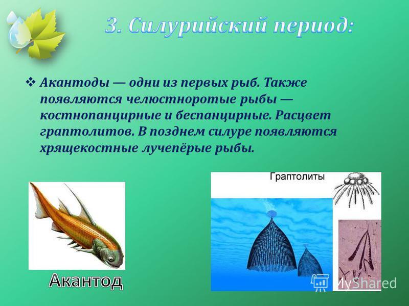 Акантоды одни из первых рыб. Также появляются челюстноротые рыбы костнопанцирные и беспанцирные. Расцвет граптолитов. В позднем силуре появляются хрящекостные лучепёрые рыбы.
