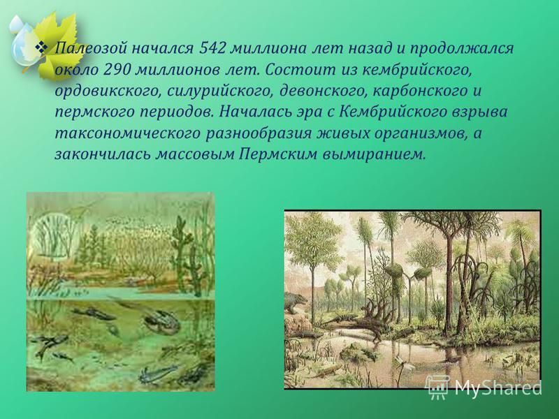 Палеозой начался 542 миллиона лет назад и продолжался около 290 миллионов лет. Состоит из кембрийского, ордовикского, силурийского, девонского, карбонского и пермского периодов. Началась эра с Кембрийского взрыва таксономического разнообразия живых о