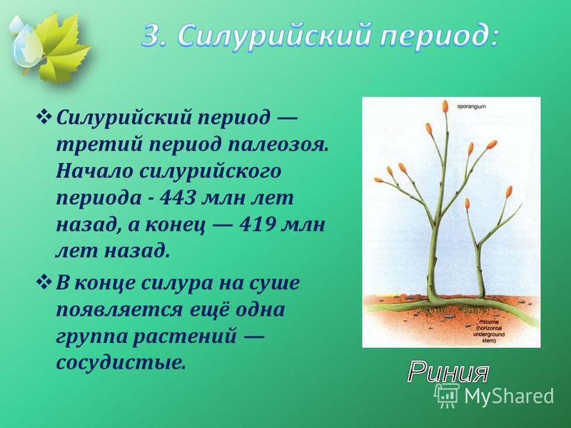 Силурийский период третий период палеозоя. Начало силурийского периода - 443 млн лет назад, а конец 419 млн лет назад. В конце силура на суше появляется ещё одна группа растений сосудистые.