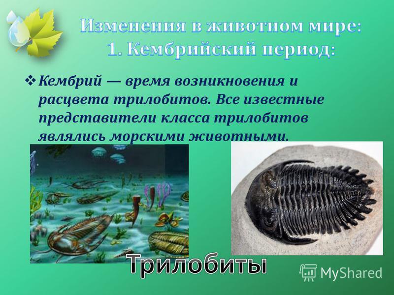 Кембрий время возникновения и расцвета трилобитов. Все известные представители класса трилобитов являлись морскими животными.