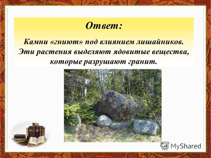 Ответ: Камни «гниют» под влиянием лишайников. Эти растения выделяют ядовитые вещества, которые разрушают гранит.