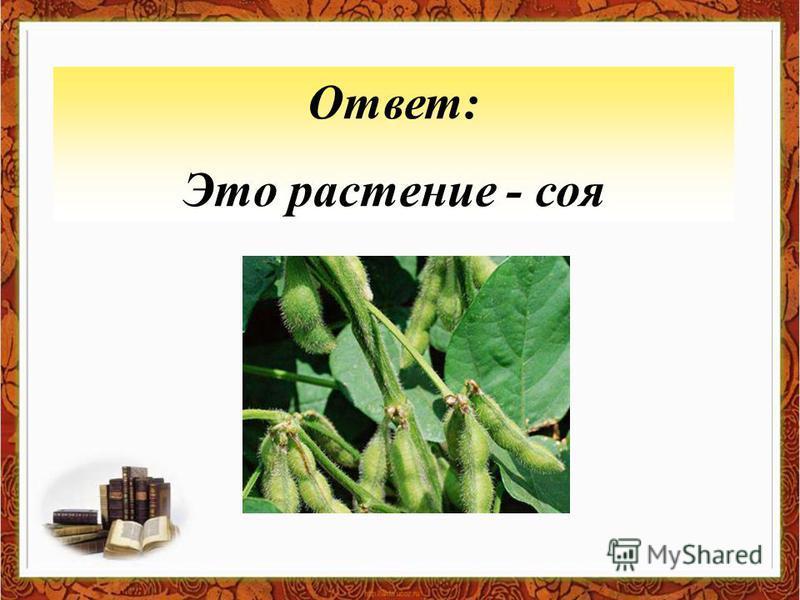 Ответ: Это растение - соя