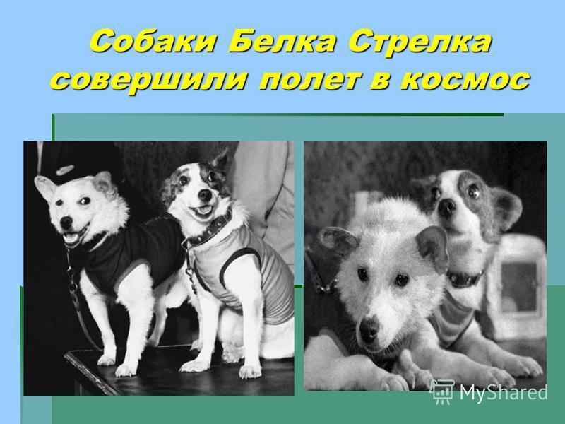 Собаки Белка Стрелка совершили полет в космос