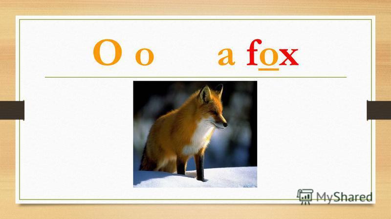O o a fox