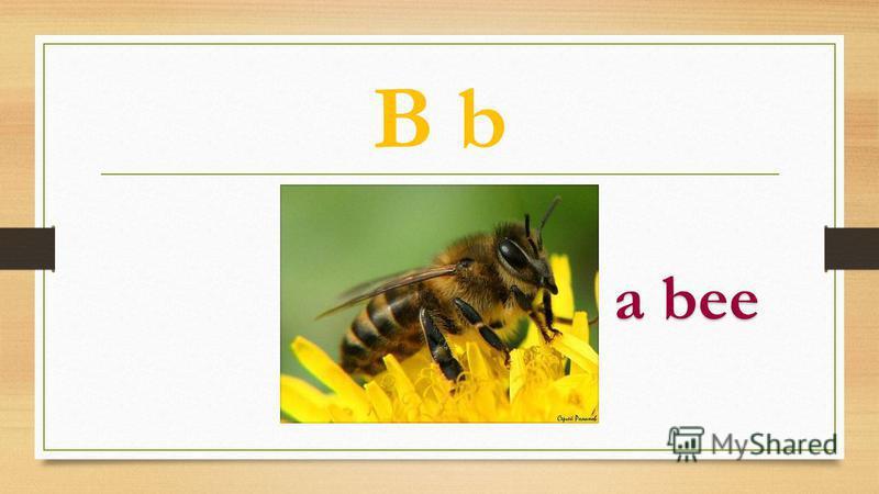 B b a bee