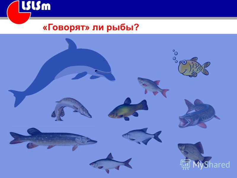 «Говорят» ли рыбы?