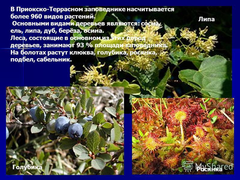 В Приокско-Террасном заповеднике насчитывается более 960 видов растений. Основными видами деревьев являются: сосна, ель, липа, дуб, берёза, осина. Леса, состоящие в основном из этих пород деревьев, занимают 93 % площади заповедника. На болотах растут