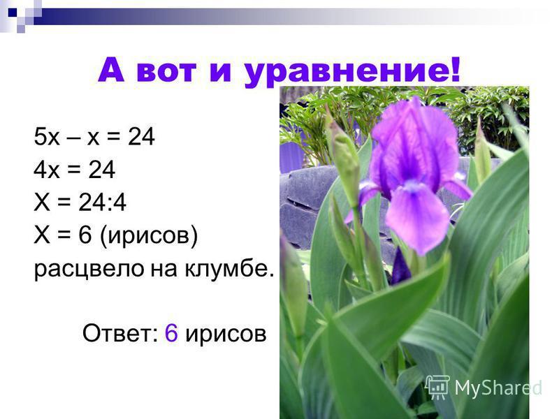А вот и уравнение! 5 х – х = 24 4 х = 24 Х = 24:4 Х = 6 (ирисов) расцвело на клумбе. Ответ: 6 ирисов