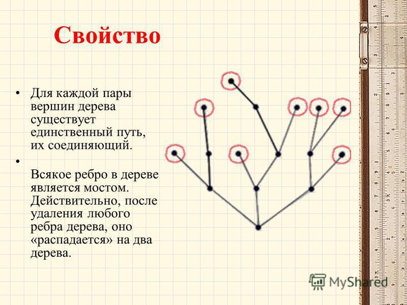 Свойство Для каждой пары вершин дерева существует единственный путь, их соединяющий. Всякое ребро в дереве является мостом. Действительно, после удаления любого ребра дерева, оно «распадается» на два дерева.