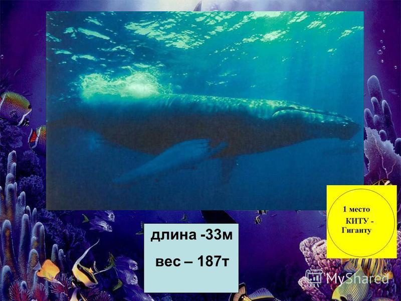 28 длина -33 м вес – 187 т