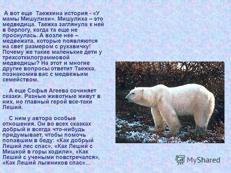 А вот еще Таежкина история - «У мамы Мишулихи». Мишулиха – это медведица. Таежка заглянула к ней в берлогу, когда та еще не проснулась. А возле нее – медвежата, которые появляются на свет размером с рукавичку! Почему же такие маленькие дети у трехсот
