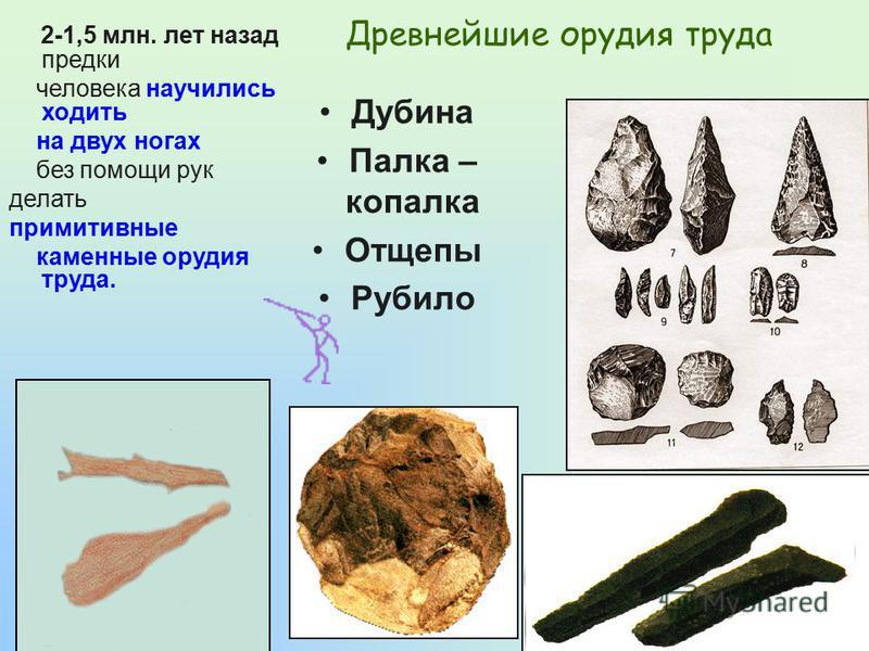 Древнейшие орудия труда Дубина Палка – копалка Отщепы Рубило 2-1,5 млн. лет назад предки человека научились ходить на двух ногах без помощи рук делать примитивные каменные орудия труда.
