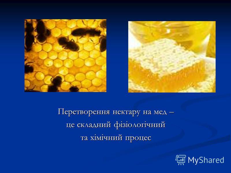 Перетворення нектару на мед – це складний фізіологічний та хімічний процес
