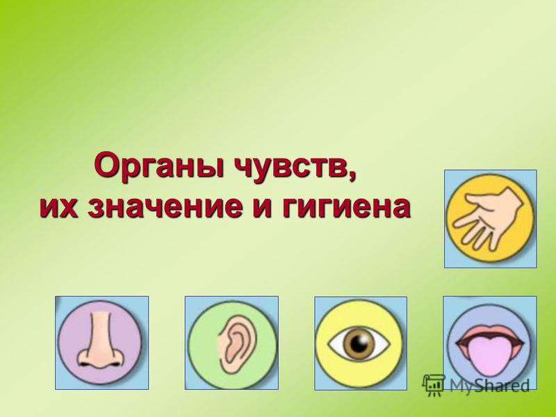 Органы чувств, их значение и гигиена
