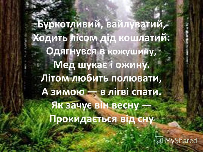 Буркотливий, вайлуватий, Ходить лісом дід кошлатий: Одягнувся в кожушину, Мед шукає і ожину. Літом любить полювати, А зимою в лігві спати. Як зачує він весну Прокидається від сну