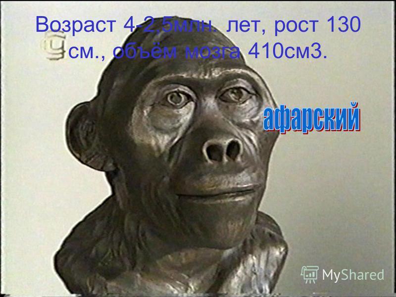 Возраст 4-2,5 млн. лет, рост 130 см., объём мозга 410 см 3.