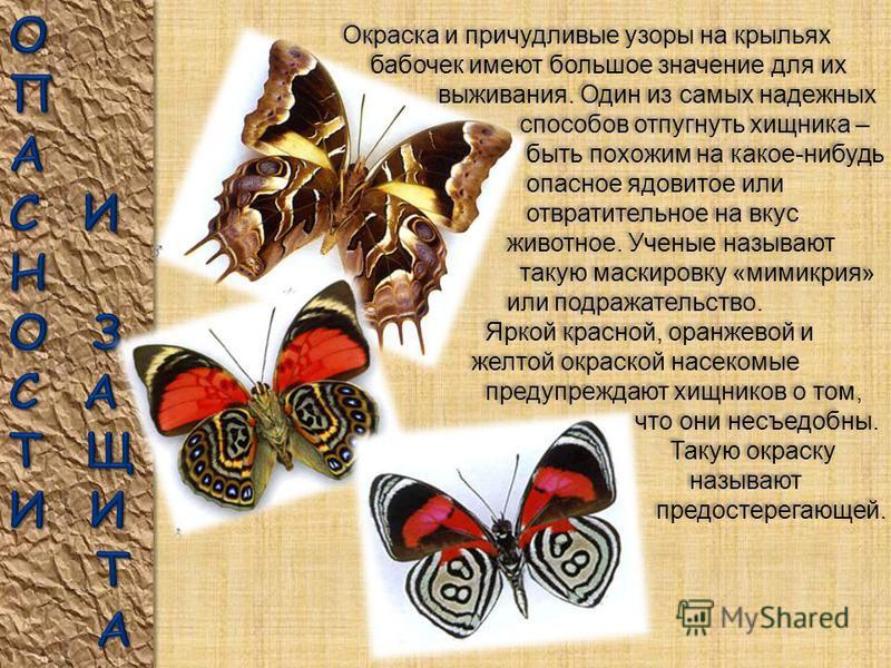 Летучая мышь – грозный враг ночных бабочек, которыми она с удовольствием лакомится. Другая опасность – сети из паутины. Попав в такую сеть, бабочка запутывается в ней и становится жертвой паука. Летучая мышь – грозный враг ночных бабочек, которыми он