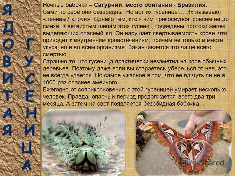 Гусеницы бывают самых разных форм и расцветок. Ими питаются многие животные, поэтому гусеницам приходится защищаться. Чтобы их не съели некоторые гусеницы обзавелись щетинками или ядовитыми бородавками. Другие стали похожи на веточки или листья расте