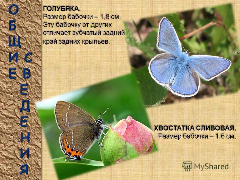 Бабочки самые известные насекомые. Ученым известно свыше 200 тысяч видов бабочек. Взрослые бабочки питаются, главным образом, нектаром, высасывая его из цветков длинным хоботком. Некоторые бабочки не питаются и хоботка у них нет. Срок жизни бабочек в