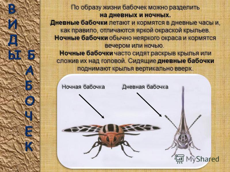 Бабочки способны пробовать предметы на вкус лапками ног. С помощью усиков бабочки распознают запахи, ориентируются в пространстве и держат равновесие в полете. Бабочки способны пробовать предметы на вкус лапками ног. С помощью усиков бабочки распозна