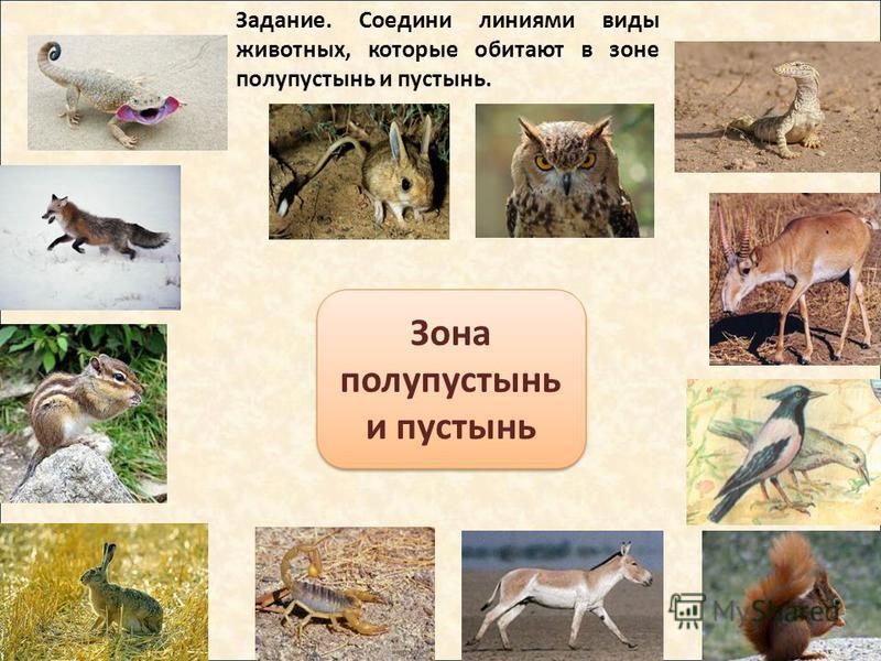 Зона полупустынь и пустынь Задание. Соедини линиями виды животных, которые обитают в зоне полупустынь и пустынь.