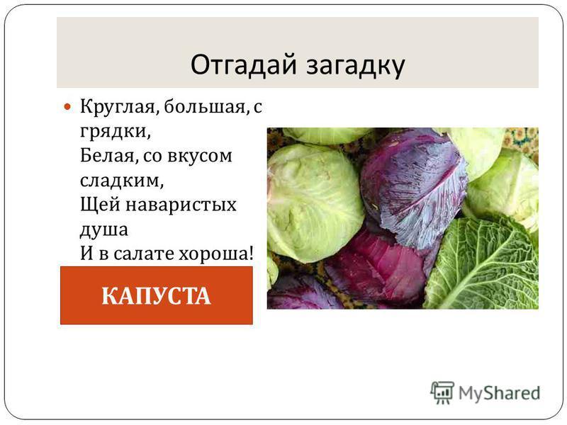 Отгадай загадку Круглая, большая, с грядки, Белая, со вкусом сладким, Щей наваристых душа И в салате хороша ! КАПУСТА