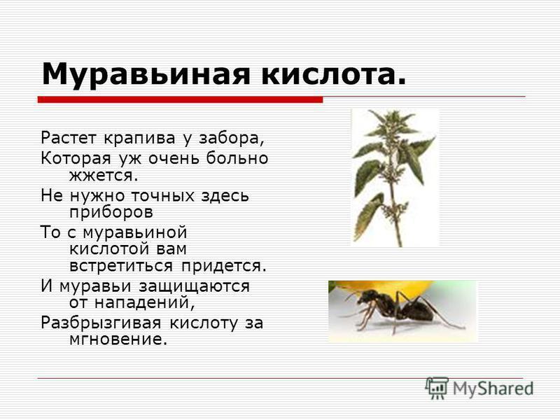 Муравьиная кислота. Растет крапива у забора, Которая уж очень больно жжется. Не нужно точных здесь приборов То с муравьиной кислотой вам встретиться придется. И муравьи защищаются от нападений, Разбрызгивая кислоту за мгновение.