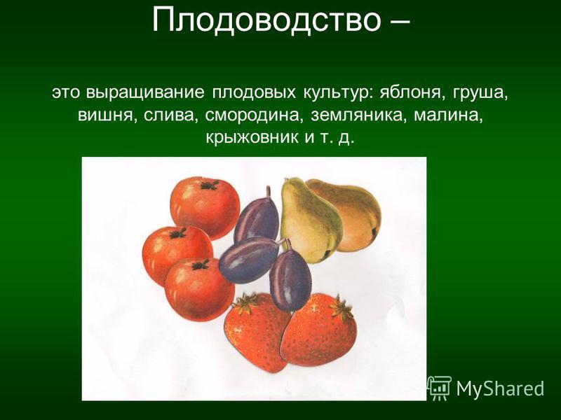 Плодоводство – это выращивание плодовых культур: яблоня, груша, вишня, слива, смородина, земляника, малина, крыжовник и т. д.