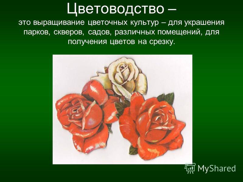 Цветоводство – это выращивание цветочных культур – для украшения парков, скверов, садов, различных помещений, для получения цветов на срезку.