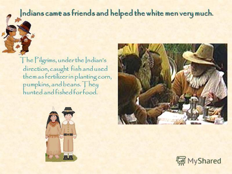 Indians cam е as friends and helped the white men very much. The Pilgrims, under the Indians direction, caught fish and used them as fertilizer in planting corn, pumpkins, and beans. They hunted and fished for food.