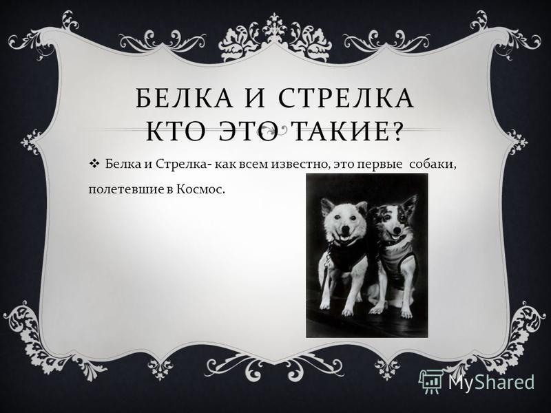 БЕЛКА И СТРЕЛКА КТО ЭТО ТАКИЕ ? Белка и Стрелка - как всем известно, это первые собаки, полетевшие в Космос.