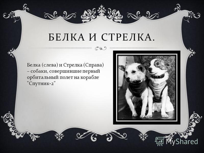 БЕЛКА И СТРЕЛКА. Белка ( слева ) и Стрелка ( Справа ) – собаки, совершившие первый орбитальный полет на корабле  Спутник -2